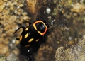 A colorful jungle roach photographed in ...