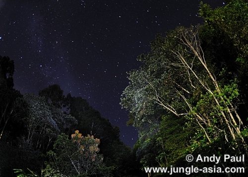 A clear starry morning at the lowland di...