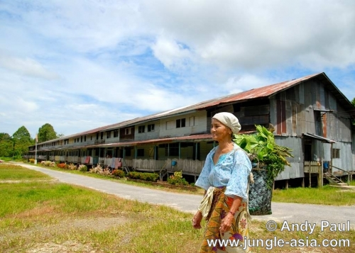 An Iban woman returns home to her longho...