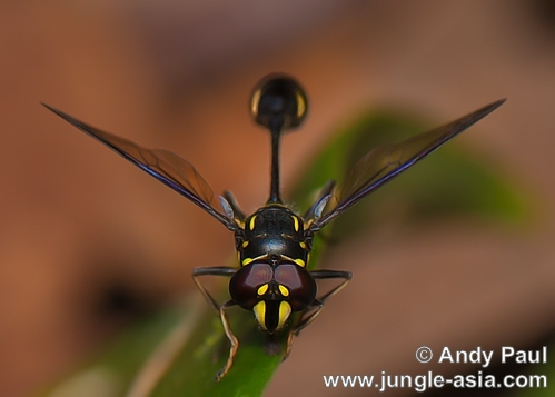 A wasp photographed in a forest of the K...