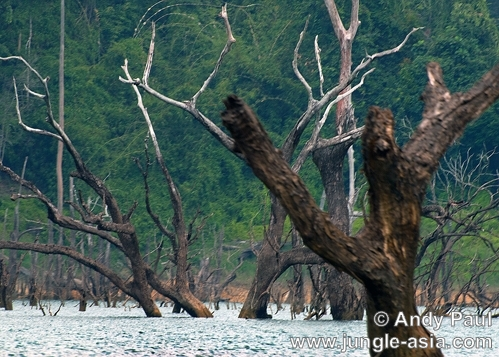 Although the many dead trees in Lake Ken...