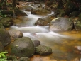 A rocky stream flowing through the lowla...