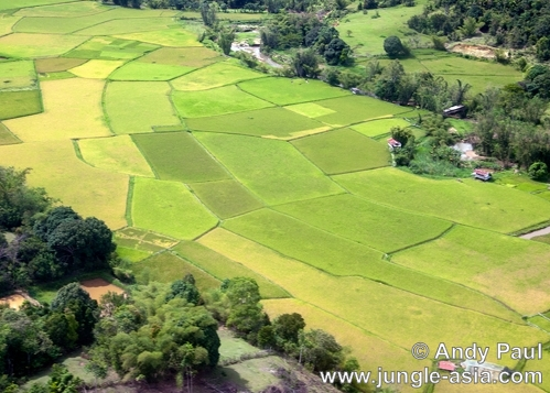 An aerial view of paddy fields in the vi...