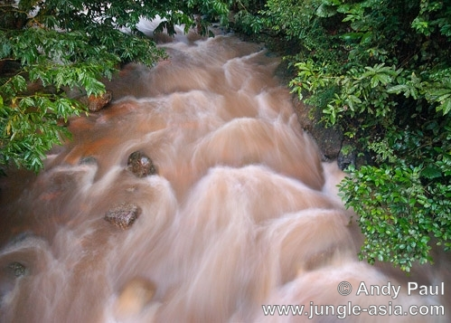 A river flowing through the lowland trop...