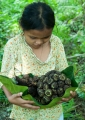 Little Mastika, a Penan from an interior...