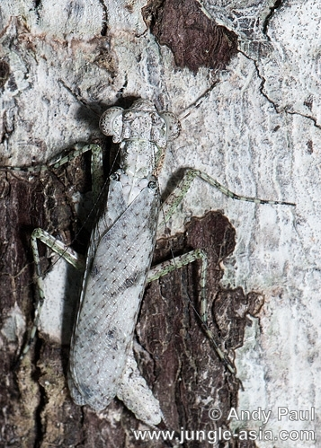 A cryptically camouflaged mantid blends ...