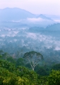 Mist hangs low over Danum Valley's virgi...